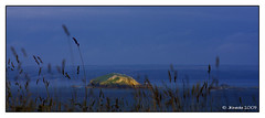 Island (JKmedia) Tags: light sea island evening coast availablelight grasses pembrokeshire sunkissed canoneos40d jkmedia n15c
