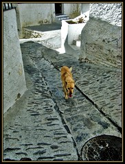 Even the dog finds the streets of Capileira too steep! (meer cottage) Tags: street dog village granada cobbles steep alpujarras capileira