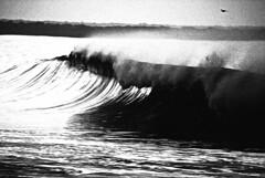 Seal Beach (hold it,I'm focusing) Tags: california beach blackwhite grainy sealbeach