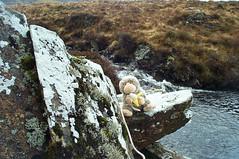 Chump has a snack by a stream