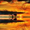 Isn't life the greatest thing of them all?? [HDR] (traumlichtfabrik) Tags: life orange tree yellow geotagged high long pentax miracle joy imagine imagination baum coordinates hdr position lat jamesblunt lebensfreude 93mm joyoflife adobephotoshopcs3 meinfreundderbaum tamron18250 k200d traumlicht traumlichtfabrik sayyestolife photomatixpro3detailsenhancer imhighonendorphinesjustcamebackfromcycling 35mmequivalent139mm 3shots2ev0ev2evhandheld