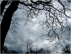 Trees and clouds (micspics444) Tags: trees sky clouds silhouettes justclouds