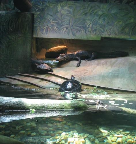Crocodile Santa Barbara Zoo