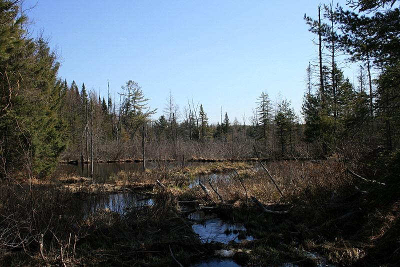 beaver ponds, less snow