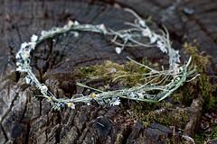 Abandoned daisy chain