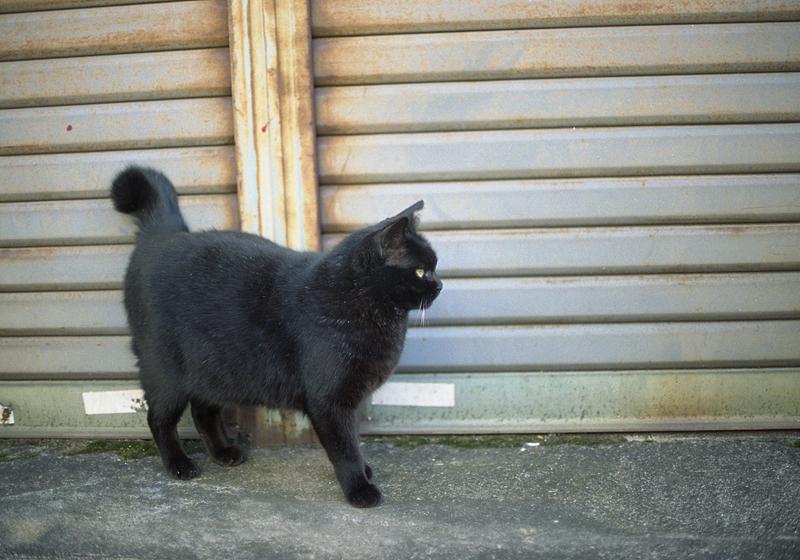 シャッター前の黒猫