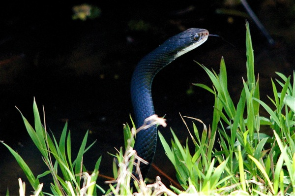 snake_0054