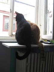 dex + fez (David Stroe) Tags: fez acasa dex pisici