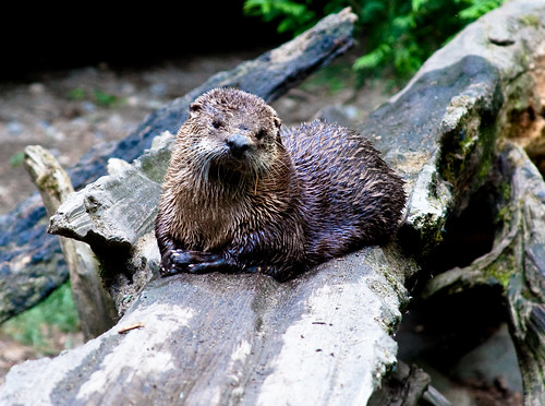 concerned otter would like you to tell him your troubles.