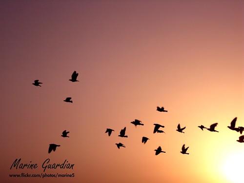 طيور لاتعرف الرحيل 3608479355_208d62e82