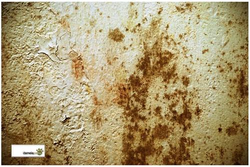Cómo eliminar humedades persistentes con salitre de las paredes ...