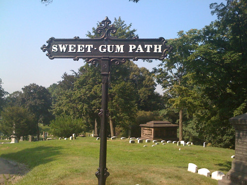 sweet gum path