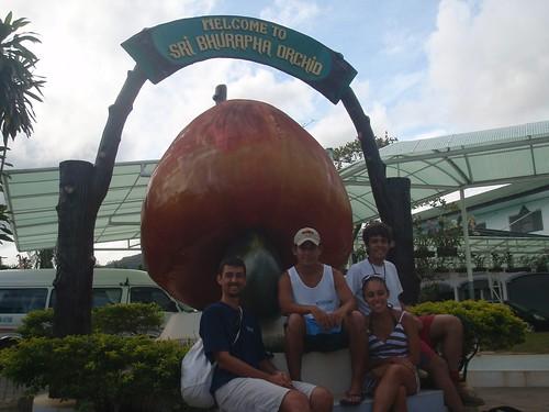El anacardo (o marañón) gigante