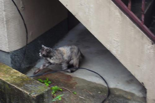 Today's Cat@2010-04-27
