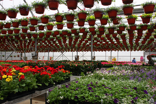 green valley nursery