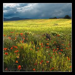 Los Royos y VI (muliterno) Tags: murcia campos losroyos
