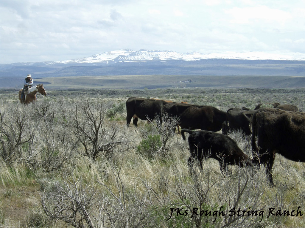Great Basin Cattle Country