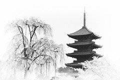 (sunnywinds*) Tags: japan spring kyoto    sakura springtime ze 4b carlzeiss  fujiprovia100f planar1485 vision:mountain=0572 vision:outdoor=099