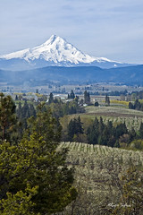 Mt. Hood in Spring (walla2chick) Tags: usa mountain oregon spring or mthood layers hoodriver orchards goldstaraward