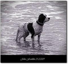 Wet dog (bonksie61) Tags: sea dog white black wet water fur framed date picnik signed ithinkthisisart almostanything allin1 anythingdigital unlimitedphotos novaphoto olétusfotos