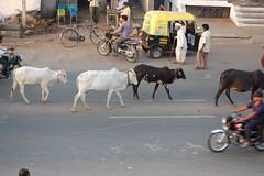 Street Scene, Bijapur