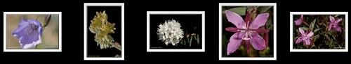 Nikon 105mm VR flower photos