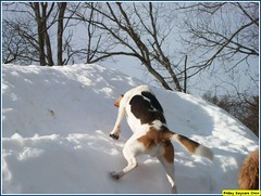 Doug makes it up the hill (Alternative Dog Daycare) Tags: jay doug buffy sonny dogdaycare alternativedogdaycare