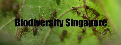 Biodiversity Singapore
