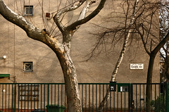 jvidk tr (sonofsteppe) Tags: street city trees urban detail building tree wall plane fence dark 50mm daylight stem mural hungary branch moody exterior place outdoor budapest gray explore trunk series birch exploration bough streetplate revisited wallscape sonofsteppe pusztafia zugl utcatbla trkr streetplatesofbudapest jvidktr urbanlifeoftrees