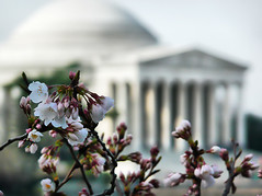 Jefferson Memorial Blooms (` Toshio ') Tags: pink flowers sky flower macro tree water closeup architecture clouds cherry washingtondc dc washington petals spring districtofcolumbia branch artistic bokeh branches blossoms columns perspective stamen cherryblossoms buds blooms soe hdr jeffersonmemorial tidalbasin cherryblossomfestival toshio highdynamicresolution superaplus aplusphoto platinumheartaward goldstaraward