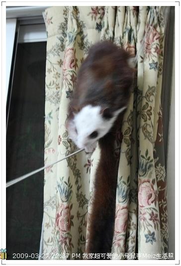 09年二三月小飛鼠Meiz生活照 (25)
