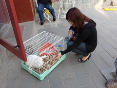 BeijingDay424