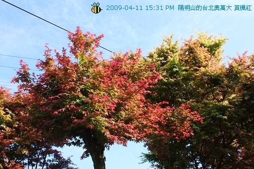 09.04.11台北奧萬大賞楓紅 (18)