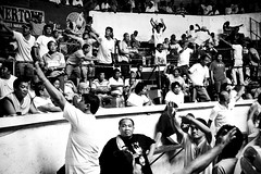 COCKFIGHT (134) (Peter_O'Driscoll) Tags: gambling game spur fight fighter attack culture cockpit clash peter coliseum rooster tradition breed combat gamble betting bet cultural gladiator manok gamecock gambler gallera sabong wager bloodsport cockfighting odriscoll stamina warrier panay gamefowl hahnenkampf cityoflove iloilocity combatdecoqs rinhadegalo bulang  colseum sagupaan g combattimentodigalli bulangan pasampok   riadegallos   sabonero manoktukaan peterodriscoll