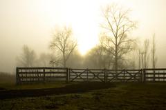 Misty Fog ( SandroG) Tags: winter field fog san pedro campo invierno garcia niebla sandro sandrog