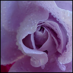 The heart of a rose ... (juntos ( MOSTLY OFF)) Tags: birthday friends rose friend bravo heart chapeau ob click inspire bestofthebest bestofflickr fff oa artisticphotography gonewiththewind greatphoto bellissima firstquality thegoldengallery thesecretgarden floralfantasy beautifulmacro imagepoetry flowerotica flickrsbest mywinners visiongroup blueribbonaward infinestyle flickrdiamondaward lesfleursdubien empyrianflowers flickrshearts theunforgettablepictures overtheexcellence goldsealofquality artbureau betterthangood dragonaward hearthsawards thirdlife passionforphotography favouritesofmyfavouri