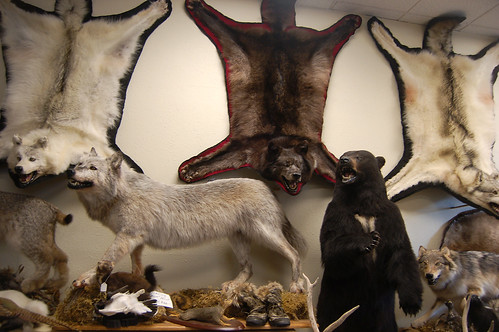 TaxidermyShop