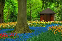 Enchanted Forest (JLMphoto) Tags: blue red holland tree green netherlands yellow garden landscape spring tulips shed explore trunk grape tool daffodils hyacinth keukenhof lisse naturesfinest mywinners colorphotoaward jlmphoto