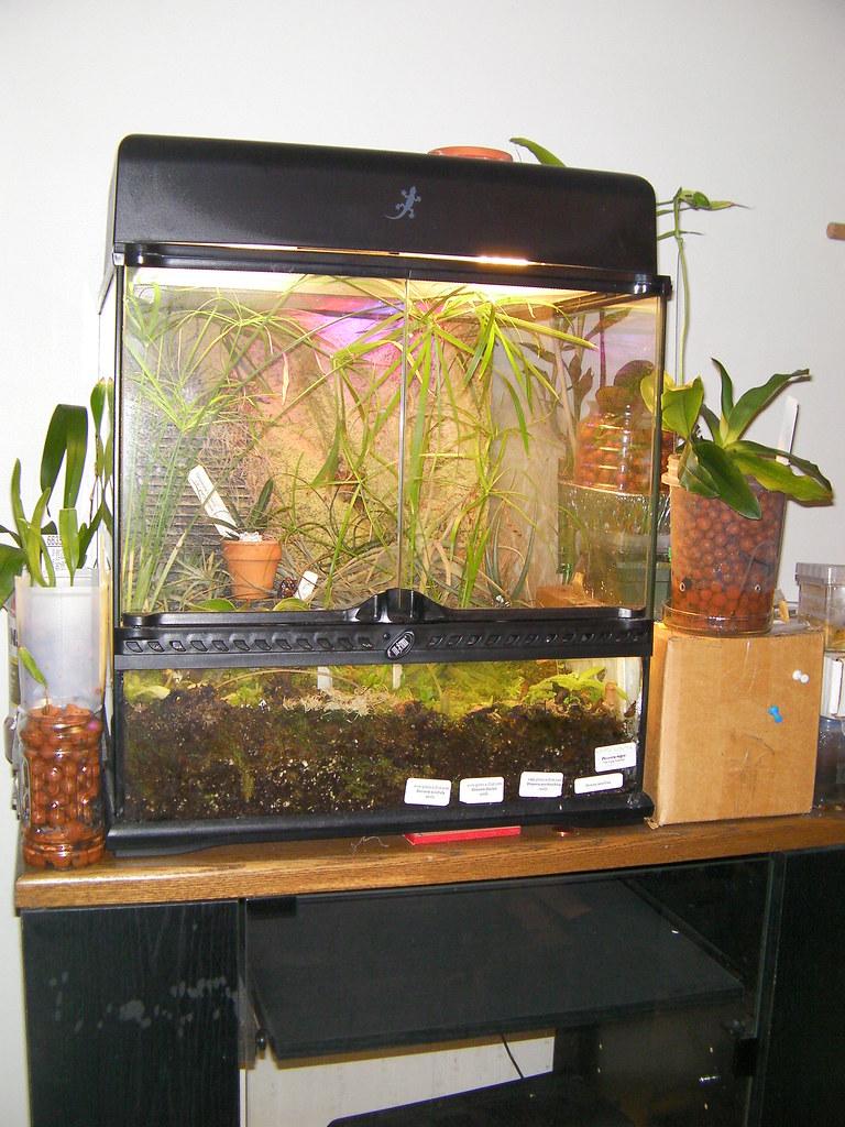 2nd Year Terrarium Carnivorous Plant Society Of Canada