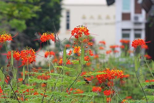 嘉義大學昆蟲館039