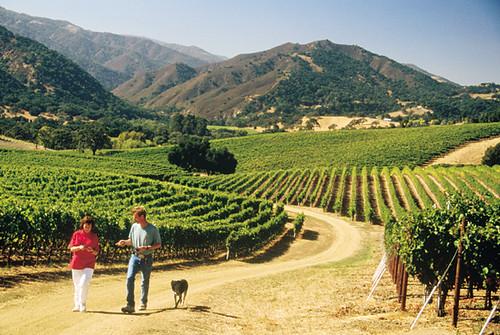 Vineyards - Carmel Valley