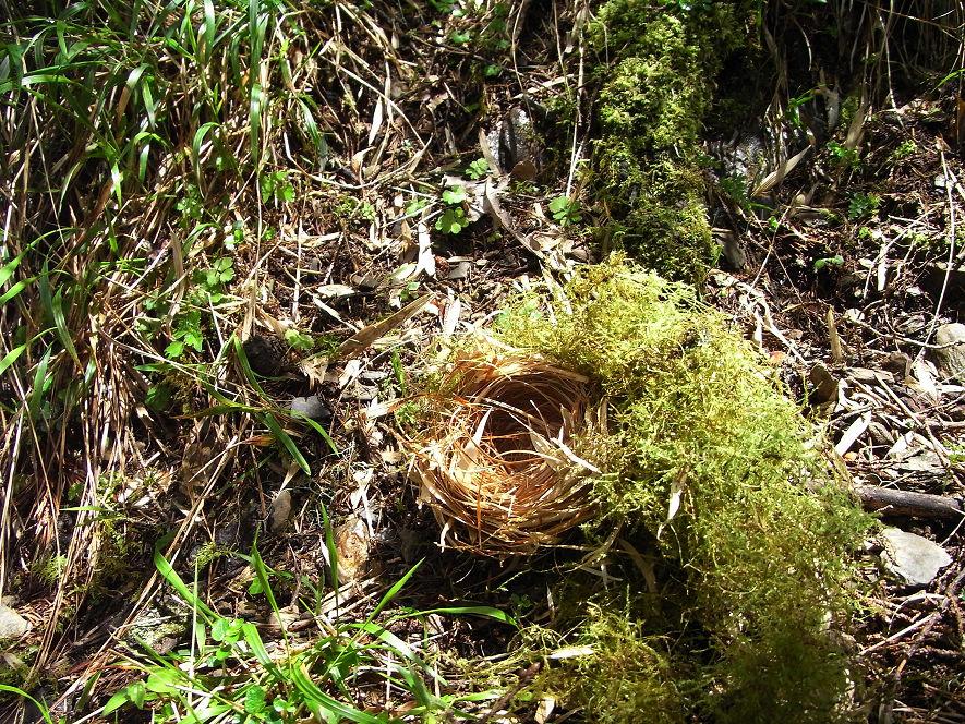 南湖大山day2-62 鳥窩