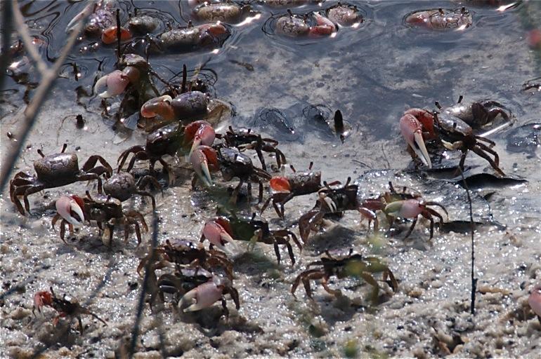 crabs_0071