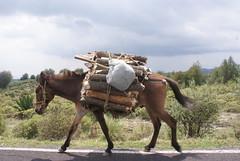 Burro de carga by FotoMimo