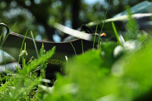 Keen in grass