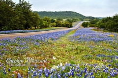 Highway of Wildflowers