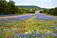 Highway of Wildflowers