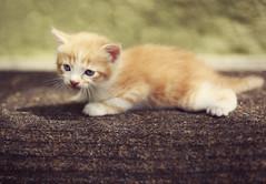 [フリー画像] 動物, 哺乳類, 猫・ネコ, 子猫・小猫, 201105191100