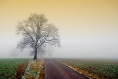 The road leads to you... (Tobi_2008) Tags: trees tree nature fog germany landscape deutschland nebel saxony natur sachsen landschaft bume allemagne germania finegold photohobby threeangels thebestpicture angelaward flickraward diamondclassphotographer flickrdiamond ultimategold thebestshot spiritofphotography padoc visionaryartsgallery qualifiedmembers leuropepittoresque flickrsgottalent fleursetpaysages bestpeopleschoice mygearandme mygearandmepremium mygearandmebronze mygearandmesilver mygearandmegold mygearandmeplatinum mygearandmediamond ringofexcellence ribbonaward chariotsofartists artistoftheyearlevel3 artistoftheyearlevel4 artistoftheyearlevel5