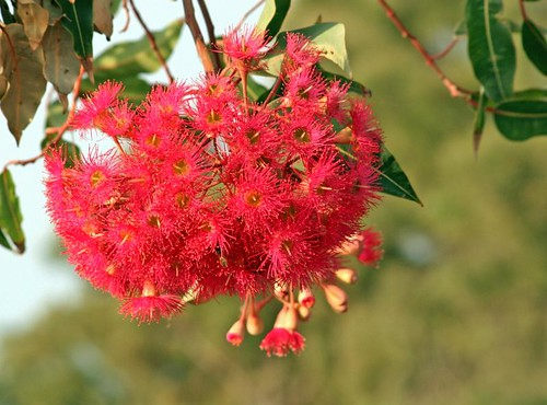 Beautiful flowers at Rosarinho (by Loca....)